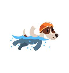cute jack russell terrier athlete swimming in pool vector image