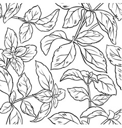 basil seamless pattern vector image