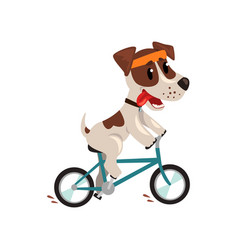 Cute jack russell terrier athlete riding a bike vector