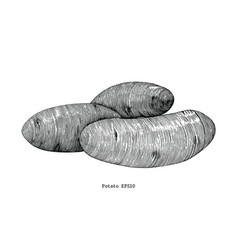 potato draw vintage clip art isolated on white vector image