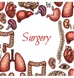 surgery poster with human organ body parts sketch vector image