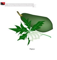 Papaya a native fruit in papua new guinea vector