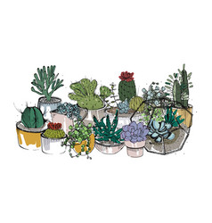Collection of hand drawn succulents cactuses and vector