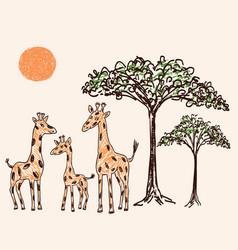 Family of giraffes in the hot savanna vector