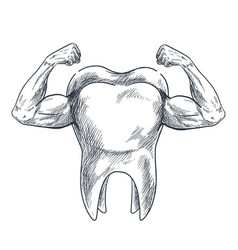 Molar with arms and strong biceps hand drawn vector