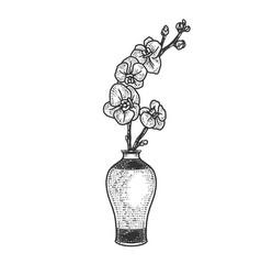 Orchid in vase sketch vector