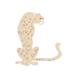 cheetah sits drawing color vector image