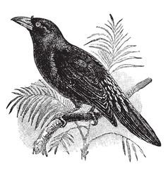 Finch billed myna vintage vector