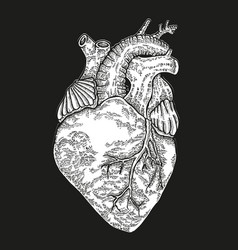 hand drawn human heart on black background vector image