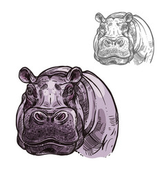 hippopotamus hippo wild animal sketch icon vector image