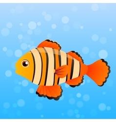 Ocellaris clownfish vector