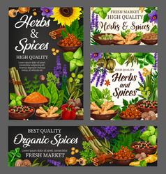 organic spices culinary herbs farm seasoning vector image