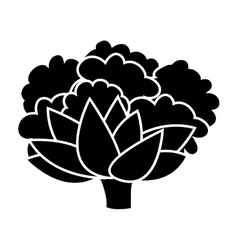Silhouette monochrome with cauliflower vegetable vector