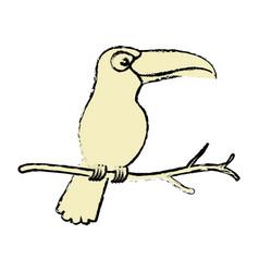 Toucan exotic bird icon vector
