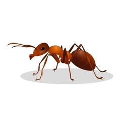 Brown ant isolated on white Insect icon Termite vector