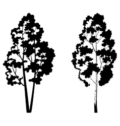 Trees birch and symbolic silhouette vector