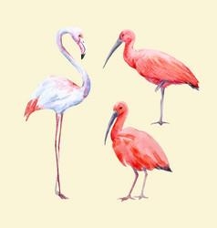 Watercolor ibis and flamingo set vector