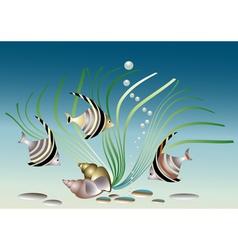 Aquarium fish with shells and plant vector image