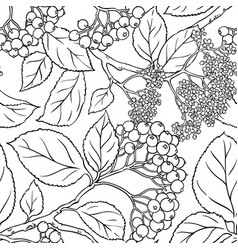Black rowan seamless pattern vector