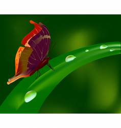 Butterfly on grass vector