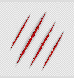Claw scratches isolated on transparent background vector