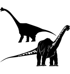 diplodocus dinosaur isolated on a new backg vector image