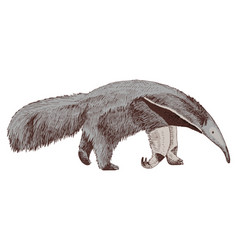 Hand drawn anteater isolated on white background vector