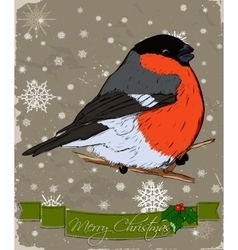 Christmas card with bullfinch vector image