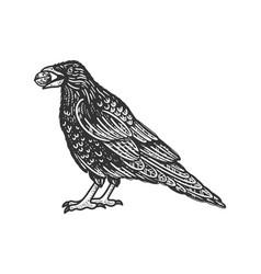 crow with nut in beak sketch vector image