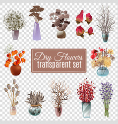 Dry flowers transparent set vector