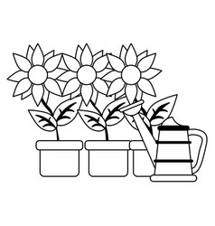 Sunflowers in pots with water can in black and vector