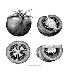 Tomatoes hand draw vintage clip art isolated on vector