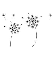 flying dandelion vector image