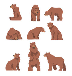 brown bear in different poses set large wild vector image