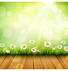 Spring Background With Daisies vector