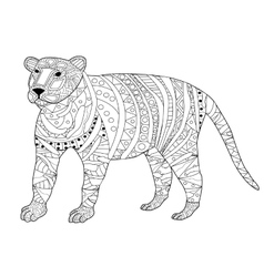 Tiger Coloring for adults vector image