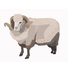 Ram sheep isolated vector image vector image