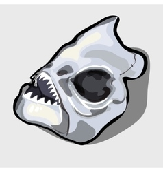 Cranial bone fish head ancient toothy creatures vector image