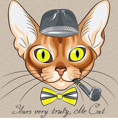 cartoon hipster cat Abyssinian vector image