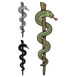 one snake caduceus vector image vector image
