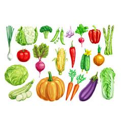 vegetable watercolor set for healthy food design vector image