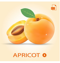 set of two fresh apricots with leaf vector image