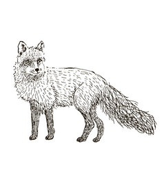 fox sketch set hand drawn vector image