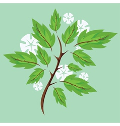 spring branches vector image