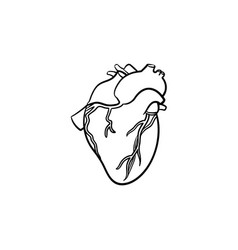 a heart hand drawn outline doodle icon vector image