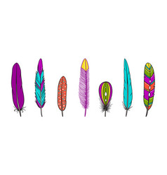 collection of boho feathers vector image