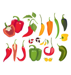 hot peppers mexican chile fresh vegetarian food vector image