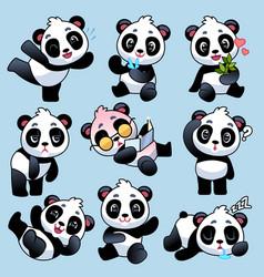panda cute asian bears in different poses vector image