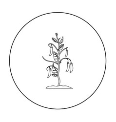 Peas icon outline single plant icon from the big vector