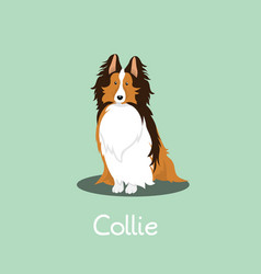 An depicting a cute collie dog vector